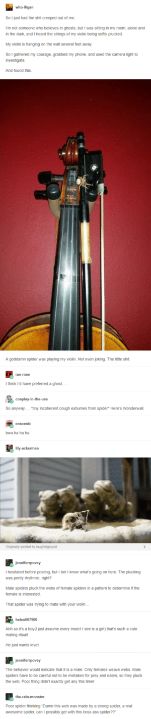 "What a player: So I just had the shit creeped out of me.  I'm not someone who believes in ghosts, but I was sitting in my room, alone and  in the dark, and I heard the strings of my violin being sotly plucked  My violin is hanging on the wall several feet away  So I gathered my courage, grabbed my phone, and used the camera light to  investigate.  And found this.  A goddamn spider was playing my violin. Not even joking. The little shit  rae-rose  I think i'd have preferred a ghost  So anyway""tiny incoherent cough exhumes from spider* Here's Wonderwall.  enscenic  bwa ha ha ha  lily-ackerman  Originally posted by laughingsquid  I hesitated before posting, but I betI know what's going on here. The plucking  was pretty rhythmic, right?  Male spiders pluck the webs of temale spiders in a pattern to determine if the  female is interested  That spider was trying to mate with your violin  helen007900  Ahh so it's a boy(I just assume every insect I see is a girl) that's such a cute  mating ritual!  He just wants love!  The behavior would indicate that it is a male. Only females weave webs. Male  spiders have to be careful not to be mistaken for prey and eaten, so they pluck  the web. Poor thing didn't exactly get any this timel  the-rain-monster  Poor spider thinking Damn this web was made by a strong spider, a real  awesome spider, can I possibly get with this boss ass spider??"" What a player"