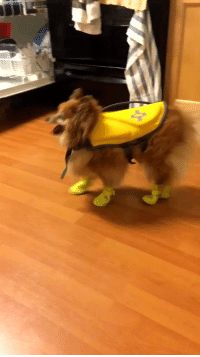 "Boots, Time, and Girl Memes: ""So I put boots on my dog for the first time and she can't stop falling over"" poor baby 😭😭 https://t.co/oOz7Sg7ea2"