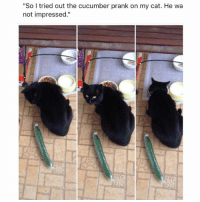 "Funny, Memes, and Prank: ""So I tried out the cucumber prank on my cat. He wa  not impressed."" Follow @hilarious.ted for more animal memes"