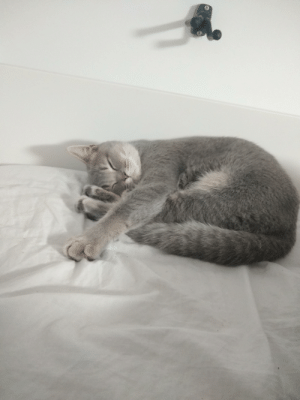 So, I was just about to cry myself to sleep and then I saw my cat sleeping on my bed like this and I just couldn't do it I just sat there with a big ass smile on my face and tears in my eyes. Thank you cat :))): So, I was just about to cry myself to sleep and then I saw my cat sleeping on my bed like this and I just couldn't do it I just sat there with a big ass smile on my face and tears in my eyes. Thank you cat :)))
