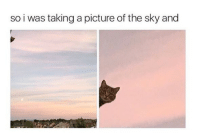 A Picture, Sky, and Picture: so i was taking a picture of the sky and