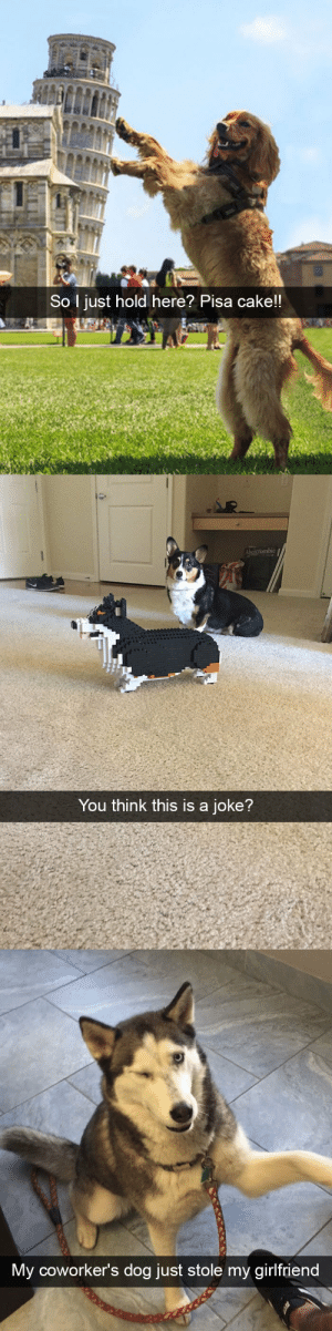 animalsnaps:Dog snaps: So l just hold here? Pisa cake!!   You think this is a joke?   My cowo  rker's dog just stole my girlfriend animalsnaps:Dog snaps