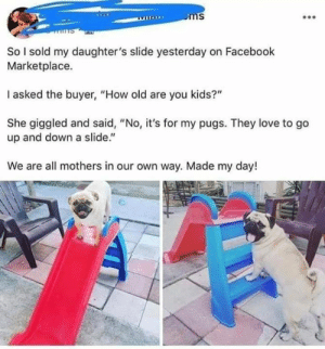 "Pugs not drugs: So l sold my daughter's slide yesterday on Facebook  Marketplace.  I asked the buyer, ""How old are you kids?""  She giggled and said, ""No, it's for my pugs. They love to go  up and down a slide.""  We are all mothers in our own way. Made my day! Pugs not drugs"