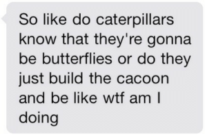 Beautiful, Phone, and Shit: So like do caterpillars  know that they're gonna  be butterflies or do they  just build the cacoon  and be ike wtf am l  doing trustedwings: frauleinninja:  this post has fucked me up more than any other on this site  Okay but no, do you understand what happens to a caterpillar once it's in its cocoon? It completely turns into goo. That's right, GOO. The damn thing dissolves and the reforms into the butterfly. Even crazier, the wings of the butterfly are already inside the caterpillar, ready to go, just waiting to float around in some goo and then be a beautiful butterfly. The craziest part?!? A study was done where some caterpillars were exposed to a certain smell and then given an electric shock so eventually the caterpillar associated the smell with the shock. Well after those little hairy noodles came out of the their cocoons as butterflies, they exposed them to the smell again and the butterflies reacted super negatively, as if they were being shocked. A.K.A. not only is there wings floating around in that goo cocoon, there is also a brain, the same, unaltered brain as the caterpillar. The butterfly can recall its days as a caterpillar even after basically being turned into soup.And then it all somehow gets its shit together to be a stupid majestic little beast, and I can't even remember where I put my damn phone.