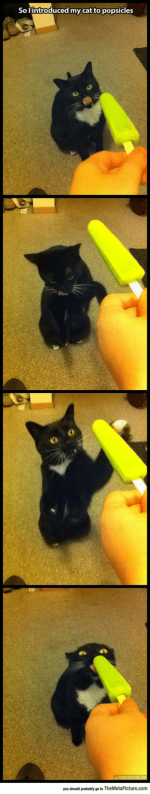 lolzandtrollz:  Cat Reacts To Popsicles: So lintroduced my cat to popsicles  ww THEMETAPICTURE.cOM  you should probably go to TheMetaPicture.com lolzandtrollz:  Cat Reacts To Popsicles