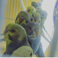 Heads, So Many, and Many: so many heads to scritch