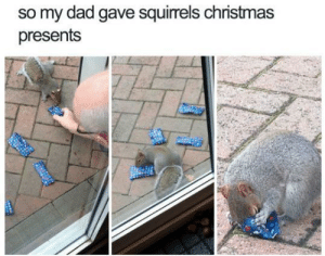Happy Late Christmas!: so my dad gave squirrels christmas  presents Happy Late Christmas!