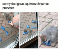 Christmas, Dad, and Merry Christmas: so my dad gave squirrels christmas  presents  to Everyone Deserves A Merry Christmas!!!😊😊😊👍👍👍