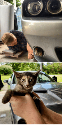 Cat, Car, and Light: So my day started with a kitten stuck in the headlight of my co workers car.