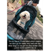 Follow @mymomsaysimpretty_ I love her page!! ❤: So my dog is 13 and blind which means  he can't go for walks very well with our  other dogs so we got him this stroller and  LOOK HOW HAPPY HE IS Follow @mymomsaysimpretty_ I love her page!! ❤