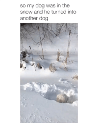 Snow, Girl Memes, and Another: so my dog was in the  snow and he turned into  another dog