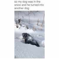 Memes, Snow, and 🤖: so my dog was in the  snow and he turned into  another dog Totally did not expect that! Credit: @sierragouldingg BVIP