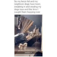 We don't deserve dogs 😂 Credit: @statchogit: So my fence fell and my  neighbors dogs have been  sneaking in and stealing my  dogs toys and this time I  caught them hopping over  CAUGHT UP We don't deserve dogs 😂 Credit: @statchogit