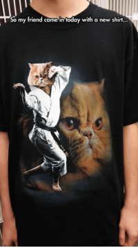 Tumblr, Blog, and Cat: So my friend came in foday with a new shirt... epicjohndoe:  Karate Cat T-Shirt