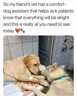 <3: So my friend's vet has a comfort-  dog assistant that helps sick patients  know that everything will be alright  and this is really all you need to see  today <3