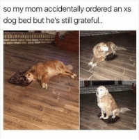 Memes, Mom, and Boy: so my mom accidentally ordered an xs  dog bed but he's still grateful goodest boy ever (thx for following @chaos.reigns_)