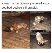 Memes, Butterfly, and Antisocial: so my mom accidentally ordered an xs  dog bed but he's still grateful Follow my other accounts @antisocialtv @lola_the_ladypug @x__antisocial_butterfly__x