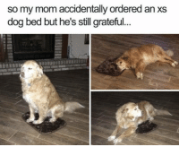 Memes, Mom, and 🤖: so my mom accidentally ordered an xs  dog bed but he's still grateful. https://t.co/NwWrtG9kRt