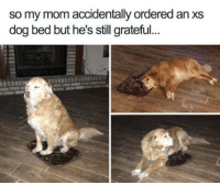 Dogs, Funny, and Amazing: so my mom accidentally ordered an xs  dog bed but he's still grateful. Dogs are amazing. https://t.co/pOIbp2vUf3