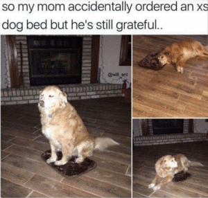 Funny, Mom, and Doggo: so my mom accidentally ordered an xs  dog bed but he's still grateful  @will_ent Grateful doggo via /r/funny https://ift.tt/2QA3DM8