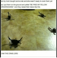 """Cookies, Cute, and Dank: so my mom bought some crab and she wasn't ready to cook them yet  so i put them on the ground and yelled """"BE FREE MY FELLOW  CRUSTACEANS."""" and they raised their claws like this  I AM THE CRAB LORD ❤︎ ❧ 😂😂 ༻❤︎༺ ❧ QOTP ➳ cookies or donuts? ❧ AOTP ➳ cookies ༻❤︎༺ accurate clean cleanmeme cleanmemes comedy cute dank dankmeme dankmemes funny ha haha hilarious kawaii kawaiimeme kawaiimemeteam lol me meme memes omg pun puns relatable tbh true tumblr tumblrpost tumblrposts wow"""
