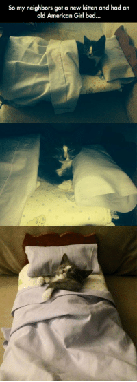 Aww, American, and Girl: So my neighbors got a new kitten and had an  old American Girl bed.. Aww.... http://t.co/IpUbouWzge