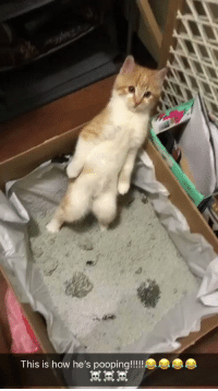 """Roommate, Girl Memes, and How: """"so my roommate rescued this kitten and this is how he's pooping..."""" 😳 https://t.co/GHy6ZG3bG5"""
