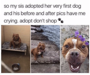all he needed was love: so my sis adopted her very first dog  and his before and after pics have me  crying. adopt don't shop all he needed was love