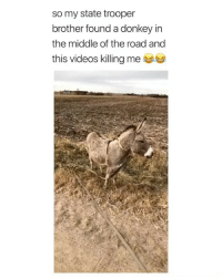 Donkey: so my state trooper  brother found a donkey in  the middle of the road and  this videos killing me