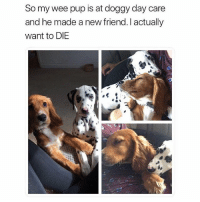 Funny, Wee, and Pup: So my wee pup is at doggy day care  and he made a new friend. I actually  want to DIE Overload of cuteness
