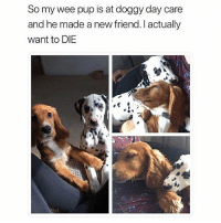 Memes, Wee, and Pup: So my wee pup is at doggy day care  and he made a new friend. I actually  want to DIE Honestly needed to see this this morning 💕😭