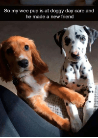 Fresh, Memes, and Wee: So my wee pup is at doggy day care and  he made a new friend 42 Fresh Animal Memes Dump of the Day