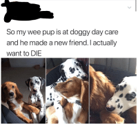 Friends, Wee, and Http: So my wee pup is at doggy day care  and he made a new friend.I actually  want to DIE dog friends via /r/wholesomememes http://bit.ly/2QYE0sL