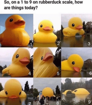 Today, How, and Seven: So, on a 1 to 9 on rubberduck scale, how  are things today?  2  $3  6  4  9  LO somewhere between six and seven