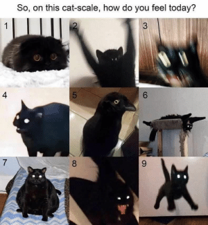 Beautiful, Cats, and Cute: So, on this cat-scale, how do you feel today?  2  3  1  4  6  7  9  8  LO #Cats_breeds #Cats_cute #black_Cats #Cats_diy #Cats_photography #Cats_art #Cats_and_kittens #Cats_drawing #Cats_memes # Cats_furniture #beautiful_Cats #Cats_aesthetic #siamese_Cats