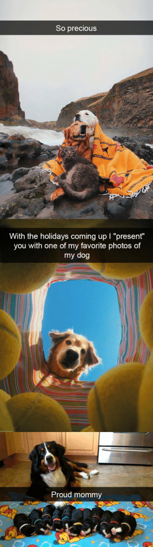 "animalsnaps:dog snaps: So precious   With the holidays coming up I ""present""  you with one of my favorite photos of  my dog   Proud mommy animalsnaps:dog snaps"
