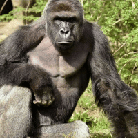 So sad to hear that Harambe was killed. I doubt he would have inflicted any intentional harm to the boy he had. RIP 😢: So sad to hear that Harambe was killed. I doubt he would have inflicted any intentional harm to the boy he had. RIP 😢