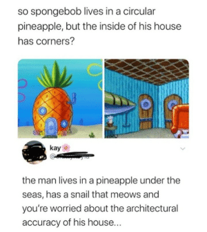SpongeBob, House, and Pineapple: so spongebob lives in a circular  pineapple, but the inside of his house  has corners?  kay  the man lives in a pineapple under the  seas, has a snail that meows and  you're worried about the architectural  accuracy of his house... Point.