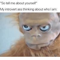 "Ass, Introvert, and Memes: ""So tell me about yourself""  My introvert ass thining about who l am: I'll get back to you on that"