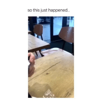 Memes, 🤖, and Com: so this just happened Damn bird walked in there like it owns the place 🤣 (contact us at partner@memes.com for credit-removal)