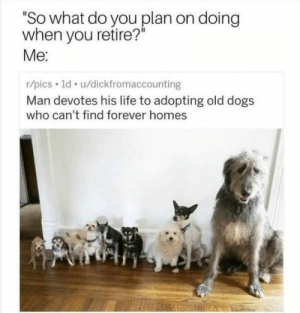 "Animals, Cute, and Cute Animals: ""So what do you plan on doing  when you retire?  Me:  r/pics ld. u/dickfromaccounting  Man devotes his life to adopting old dogs  who can't find forever homes Have some faith in humanity, people! #wholesome # wholesome memes # animal memes # feel good memes # kind memes # cute animals # memes # faith in humanity restored"