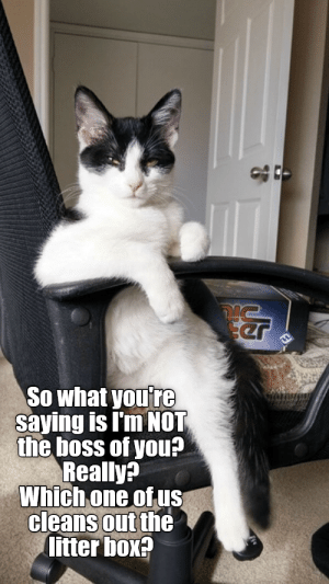 Memes, Box, and Boss: So what youre  Saying is I'm NOT  the boss of you?  Really?  Which.one of us  cleans out the  litter box? Top 25 Memes of The Week - Cheezburger Users Edition #81 - I Can Has Cheezburger?