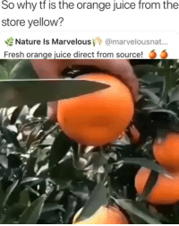 Fresh, Juice, and Memes: So why tf is the orange juice from the  store yellow?  Nature is Marvelous/7 @marvelousnat..  Fresh orange juice direct from source! Damn, the real juice has arrived
