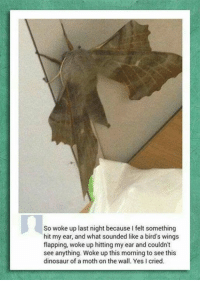 Dinosaur, Memes, and Birds: So woke up last night because I felt something  hit my ear, and what sounded like a bird's wings  flapping, woke up hitting my ear and couldn't  see anything. Woke up this morning to see this  dinosaur of a moth on the wall. Yes cried.