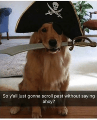 Ahoy, Just, and Gonna: So y'all just gonna scroll past without saying  ahoy? ahoy there matey