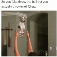 Fake, Memes, and Tbh: So you fake throw the ball but you  actually throw me? Okay. Haaa wish I had a dog tbh