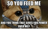 SO YOU FEED ME  AND YOUTHINK THAT GIVES YOUPOWER  OVER ME?  memegenerator net Bane Cat 😀 catmemes catmemesarethebest catsofinstagram cats thedarkknightrises bane banememes