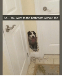 If you've been longing for a good old-fashioned roundup of memes, look no further! #RandomMemes #FunnyMemes #Dogs #Doggo: So... You went to the bathroom without me  poredpanda.com If you've been longing for a good old-fashioned roundup of memes, look no further! #RandomMemes #FunnyMemes #Dogs #Doggo