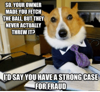 a re-post of the popular dog lawyer meme!: SO, YOUR OWNER  MADE YOU FETCH  THE BALL BUT THEY  NEVER ACTUALLY  THREW IT?  ID SAY YOU HAVE A STRONG CASE  FOR FRAUD a re-post of the popular dog lawyer meme!