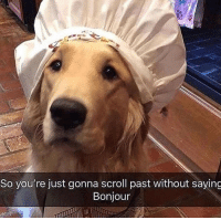 bonjour: So you're just gonna scroll past without saying  Bonjour